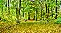 Bois de Dieleghem 2.jpg