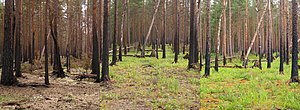 Complex early seral forest - Complex early seral forest in boreal forest 1, 2, and 3 years post fire