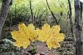 Borjomi Kharagauli National Park (10).jpg