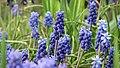 Botanic Garden - Cluj Napoca (2439445132).jpg