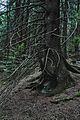 Boubínský prales - panoramio.jpg