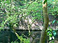 Bridge remains, near Tucking Mill, Monkton Combe - geograph.org.uk - 422722.jpg