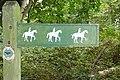 Bridleway in Hawkridge Wood - geograph.org.uk - 981133.jpg