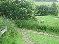 Bridleway junction in Lullingstone Country Park - geograph.org.uk - 1349910.jpg