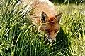 British Wildlife Centre Wildlife (29989594483).jpg