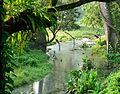 Brook, trees and shrubs at Jaldapara.jpg