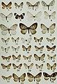 Butterflies and moths of Newfoundland and Labrador - the macrolepidoptera (1980) (20323058688).jpg