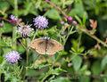 Butterfly (14441244010).jpg