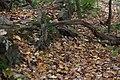 Buttermilk Falls - panoramio (23).jpg