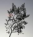 CA 0950 - GRANITE MT CAMPSITE, mojave preserve -07 (12-2011) (6656729655).jpg