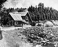 COLLECTIE TROPENMUSEUM Bungalow en waterplanten Tobameer TMnr 10017587.jpg