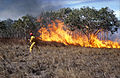 CSIRO ScienceImage 558 Grassfire Experiment.jpg