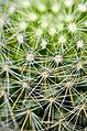 Cactus Detail (4025451171).jpg