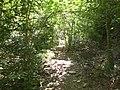 Camí al Clot de Sant Corneli (maig 2011) - panoramio.jpg