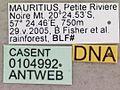 Camponotus aurosus casent0104992 label 1.jpg