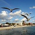Cancun - panoramio (10).jpg