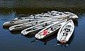 Canoes de mer à Vannes.jpg