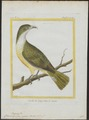 Casmarhynchus niveus - 1700-1880 - Print - Iconographia Zoologica - Special Collections University of Amsterdam - UBA01 IZ16600173.tif