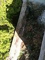 Castello Frangipane. Esterno 2 (camminamento) 1.jpg