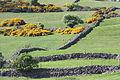 Castlewellan countryside, May 2010 (14).JPG