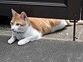 Cat (2618594830).jpg