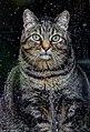 Cat (Black).jpg