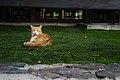 Cat in the grass of Hotel Rural Maipez 03.jpg