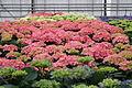 Centre horticole de la Ville de Paris a Rungis 2011 104.jpg
