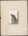Cercopithecus cephus - 1700-1880 - Print - Iconographia Zoologica - Special Collections University of Amsterdam - UBA01 IZ19900070.tif