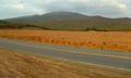 Cerro tasajero 3.1.PNG