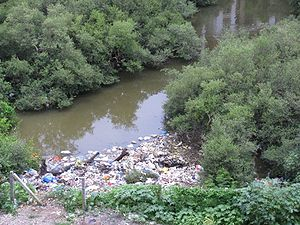 Charkop - Illegal dumping of waste is damaging the mangroves and is not a pleasing site.