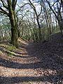 Chuchelský háj, lesní cesta od kostela do Velké Chuchle.jpg