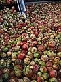 Cider Apples (22034976899).jpg