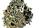 Cladonia strepsilis-3.jpg
