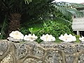 Clam Shells Decorating a Wall - panoramio.jpg