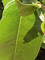 Close up of a tropical plant's leaf.jpg