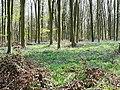 Cobham Frith, near Marlborough - geograph.org.uk - 1265348.jpg