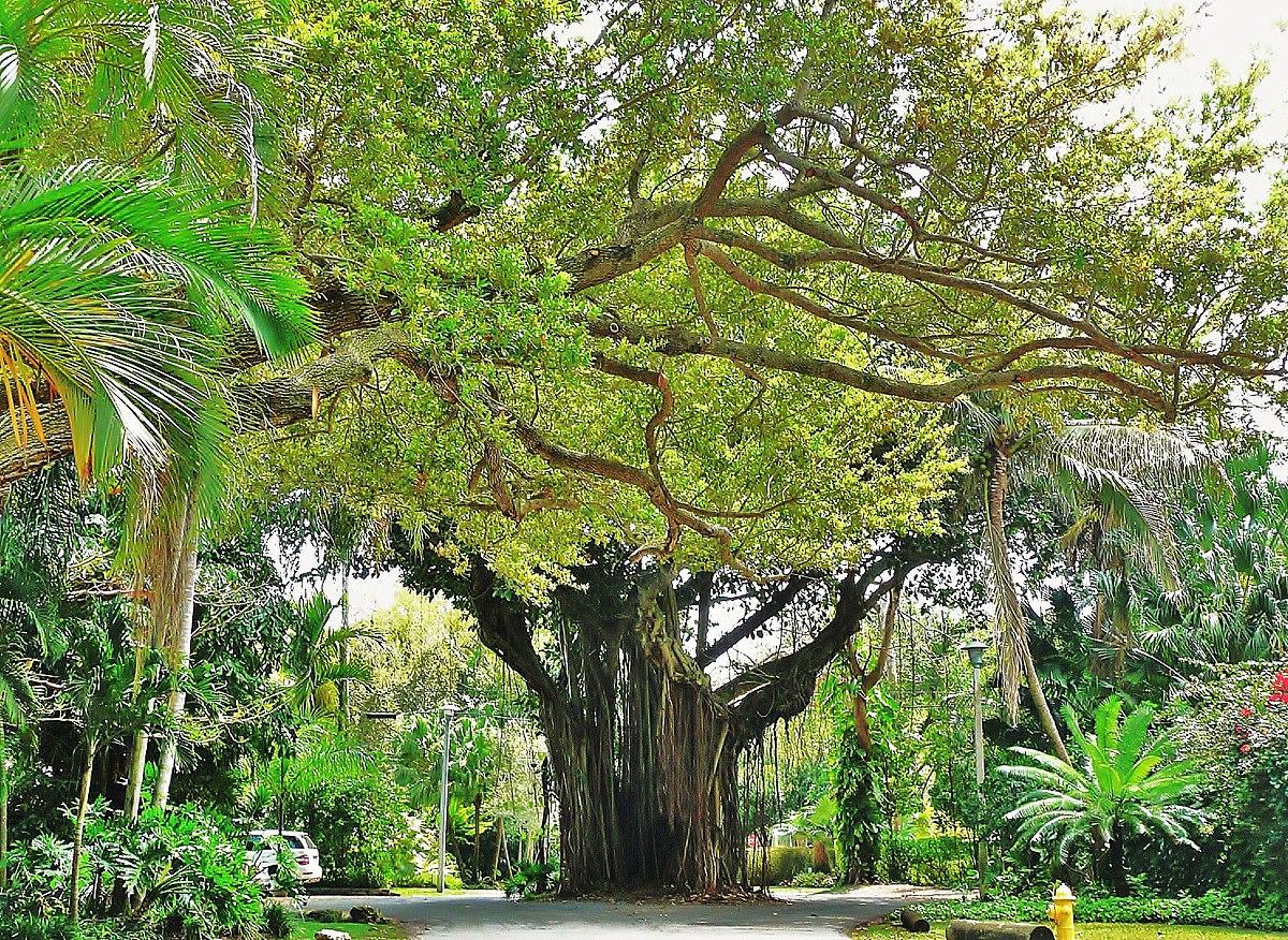 Coconut Grove Beach Residences Fort Lauderdale Fl