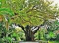 Coconut Grove Street 20100321.jpg
