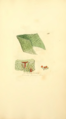 Coloured Figures of English Fungi or Mushrooms - t. 411.png