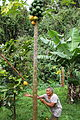 Cook Islands IMG 3990 (8453051834).jpg