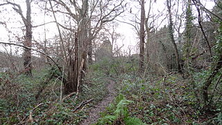 Coombe Hill Wood