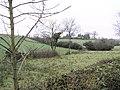 Corkill near Fintona - geograph.org.uk - 95827.jpg