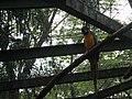 Costa Rica (6094720726).jpg