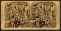 Cotton is king - A plantation scene, Georgia, by Strohmeyer & Wyman.png