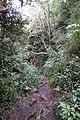 Crater Rim walkway 210.JPG