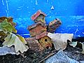 Crib in Via Bronia (Galletto,Vaiano) 11.jpg