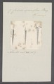 Criseis spinifera - - Print - Iconographia Zoologica - Special Collections University of Amsterdam - UBAINV0274 080 07 0020.tif