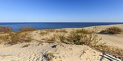 Curonian Spit NP 05-2017 img15 Epha Dune.jpg