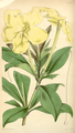 Curtis's Botanical Magazine, Plate 4287 (Volume 73, 1847).png